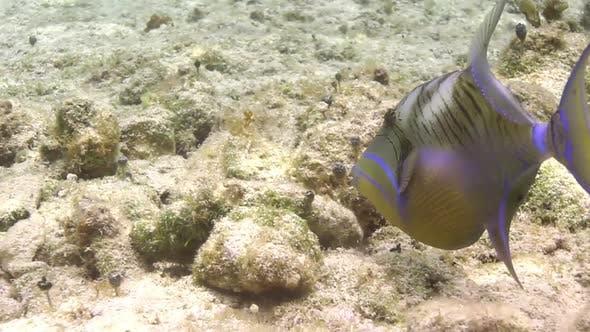 Thumbnail for Unterwasserschnorcheln. Mexiko