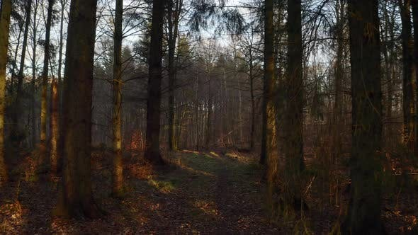 Thumbnail for Denmark Forest with Footpath