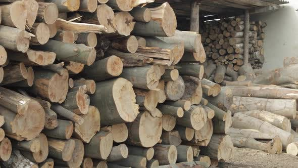 Thumbnail for Freshly Cut Tree Wooden Logs Piled Up
