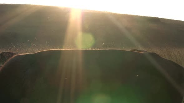 Thumbnail for Bison Several Walking Moving in Summer Dusk Twilight Evening Insects Sun Flare Cross