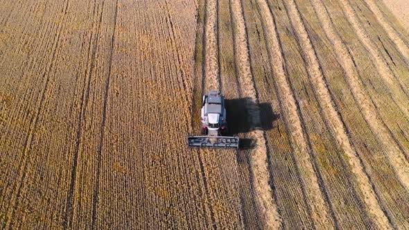 Thumbnail for Aerial View: Combine Harvester Harvesting Ripe Corn on Harvest Field