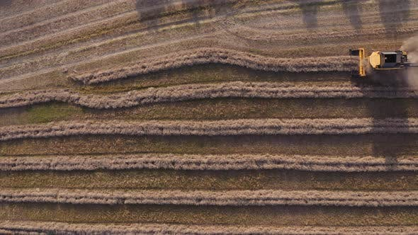 Thumbnail for Drone Of Combine Harvesting Crops In Field