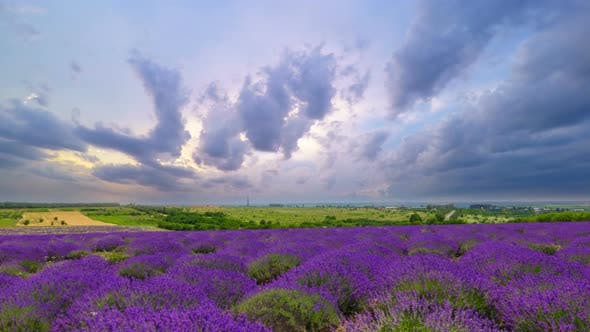 Thumbnail for Fluffy Clouds Over A Field Of Lavender