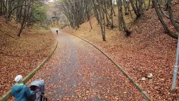 Thumbnail for Autumn park in November 5