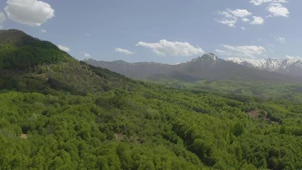 Mountain at spring