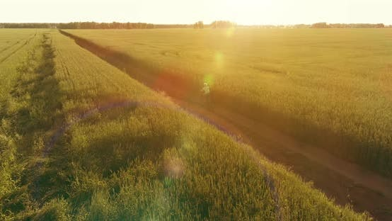 Thumbnail for Aerial View on Young Boy That Rides a Bicycle Thru a Wheat Grass Field on the Old Rural Road