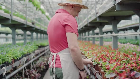 Side View of Positive Mid-adult Man Admiring Red Flowers in Greenhouse. Portrait of Confident