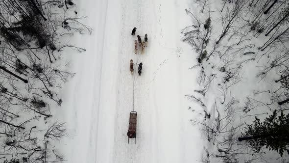 Drone Aerial View of Dogsledding Handler with Team of Trained Husky Dogs Mountain Pass Husky Dog