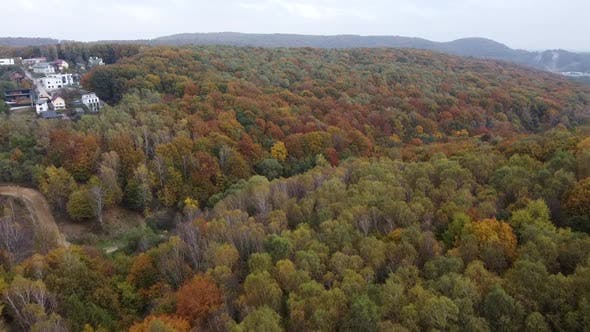 Thumbnail for Drone Flying Over the Forest
