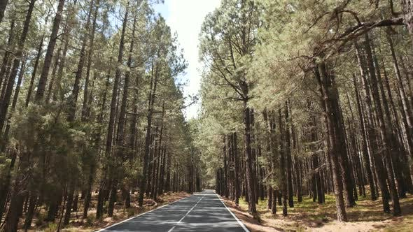 Thumbnail for POV Driving Through a Pine Forest in Mountains. Point of View Driving,view From Inside the Car on