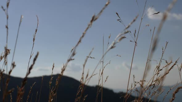 Thumbnail for The Grass Stalks Sway in the Wind