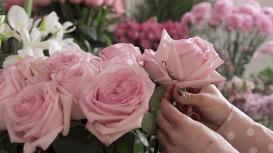 Thumbnail for Florist Choosing, Picking, Adjusting Pink Rose Flowers. Close Up.