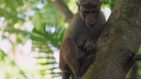 Adorable Monkey with Short Fur Sits on Tree and Looks Around