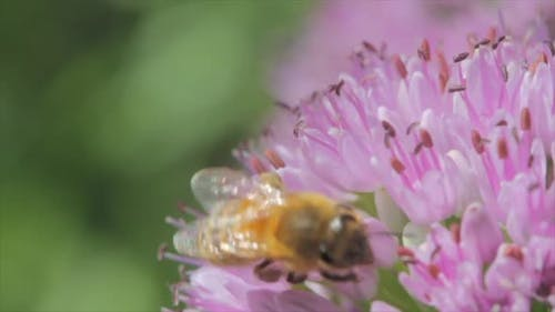 A macro close-up of a bee on a flower