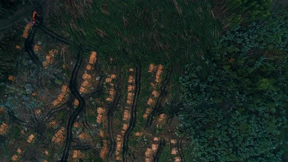 Thumbnail for Aerial View Flying Over Destroyed Cut Forest