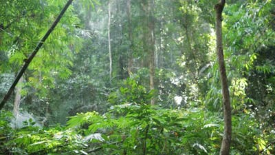 Lush Tropical Rainforest and Backpacker Lady Passing Camera