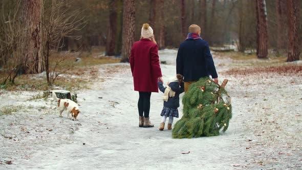 Familie trägt einen Baum im Park