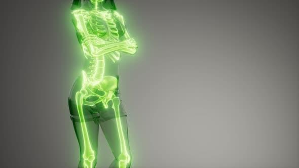 Thumbnail for Human Skeleton Radiography Medical Scan