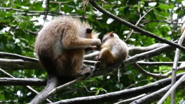 Cover Image for Mother and baby monkey in the forest