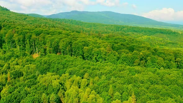 Drone Flies Above Forest in Highland