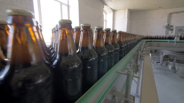 Thumbnail for Bottles of Beer Are on Transporting Belt in Plant of Brewing Factory