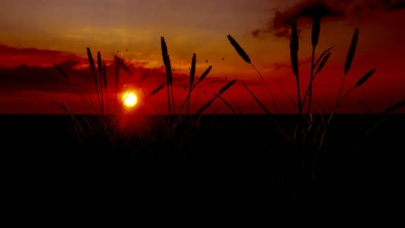 Thumbnail for Sunset and Wheat Grains Landscape
