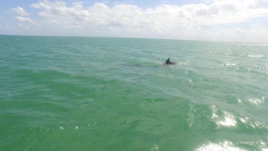 Thumbnail for Dolphins Jump Out Of Green Atlantic Ocean Sunny Reflection Off Water