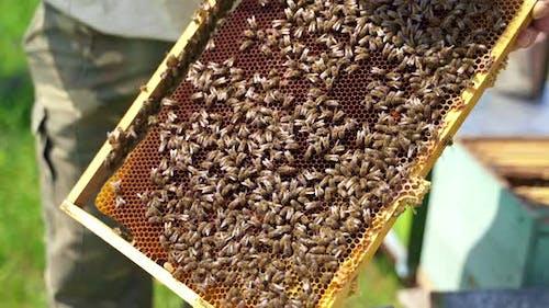 Bees producing honey