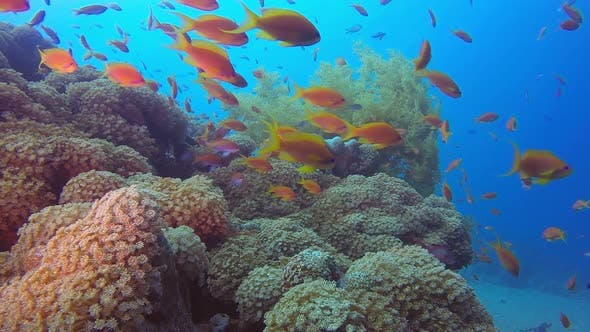 Thumbnail for Marine Garden Underwater