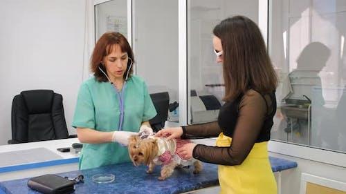 Vet Examining Dog with Stethoscope in Vet Clinic