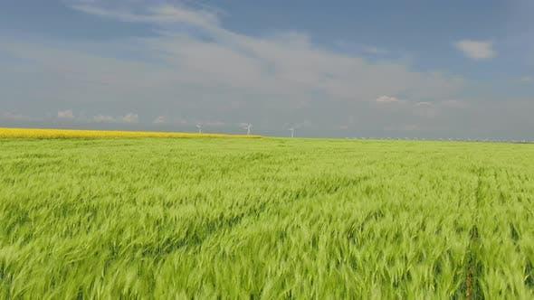 Thumbnail for Flug über das grüne Wheatfield nach Windenergieanlagen bei Horisont Wind Blow Green Spikes