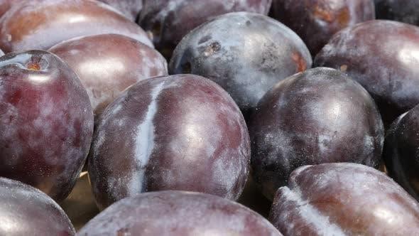 Thumbnail for Organic plum fruit from genus Prunus slow tilt 4K footage
