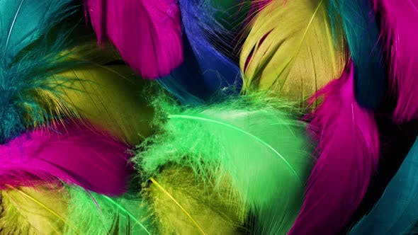 Beautiful Rotating Background of Colorful Tropical Birds Feathers. Bird Natural Pattern. Close-up
