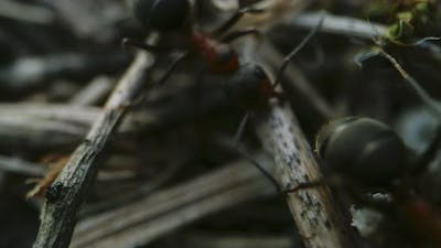 Ants Working in Ant Colony
