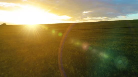 Thumbnail for Flight Above Rural Summer Landscape with Endless Yellow Field at Sunny Summer Evening. Agricultural