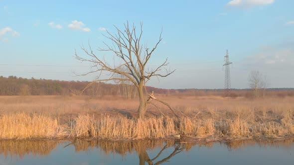 Dry tree river