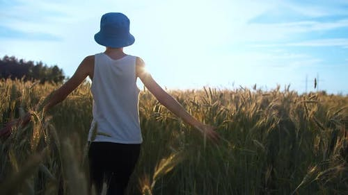 Funny Boy Walks on a Golden Wheat Field at Sunset Against a Beautiful Sky Color Grade Shot