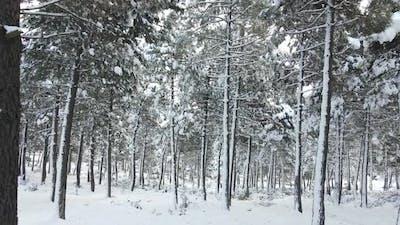 Frozen Forest White Winter Snow