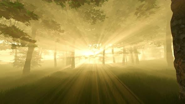 Forest Sunset Sunbeams