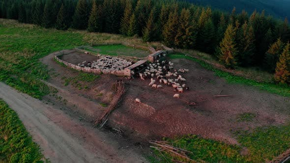 Thumbnail for Aerial Drone View, Free Range Sheep in the Stall in High Mountains