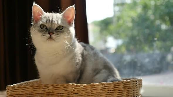 Cute Kitten Playing In A Basket