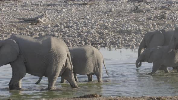Thumbnail for Elephant Herd in the Waterhole
