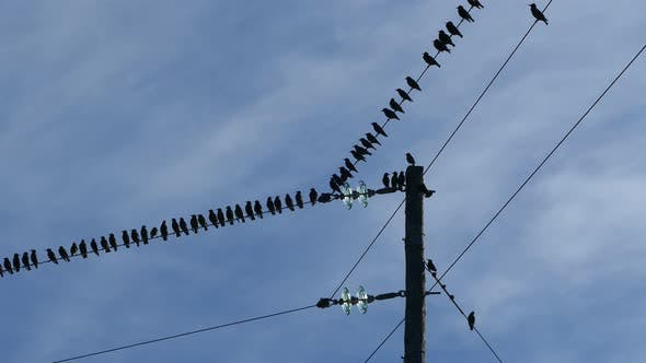 Thumbnail for Little birds on an electric pole