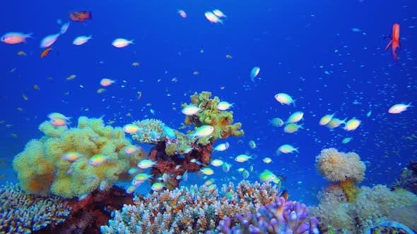 Thumbnail for Reef Coral Tropical Garden