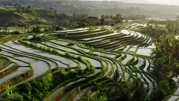 Thumbnail for Aerial View Of Water Filled Rice Terrace At Morning. Beautiful Landscape Of Tropical Rice Fields