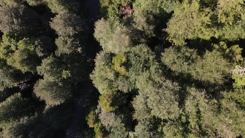 Above Forest