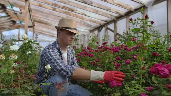 Thumbnail for Young Man Shopping for Decorative Plants on a Sunny Floristic Greenhouse Market. Home and Garden