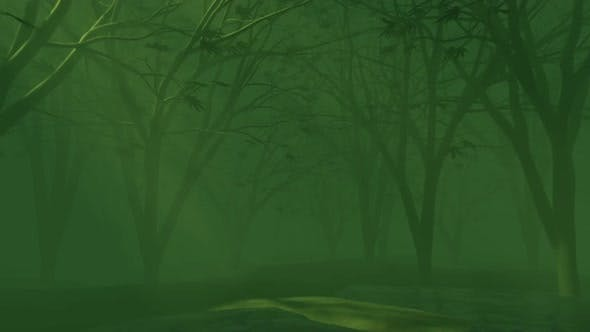 The rays of the sun during sunrise in the mysterious green misty forest, nature looped background