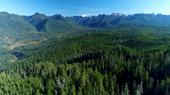 Thumbnail for Above Thick Forest Woods Cascade Mountain Foothills Untouched Natural Pacific Northwest Landscape