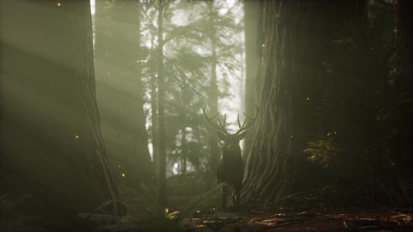 Thumbnail for Beautiful Deer in the Forest with Amazing Lights at Morning
